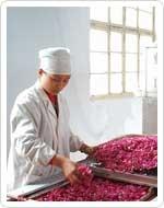 玫瑰花干燥专利烘干设备