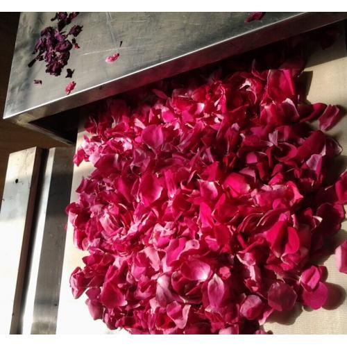 玫瑰花杀青机金银花干燥专利设备